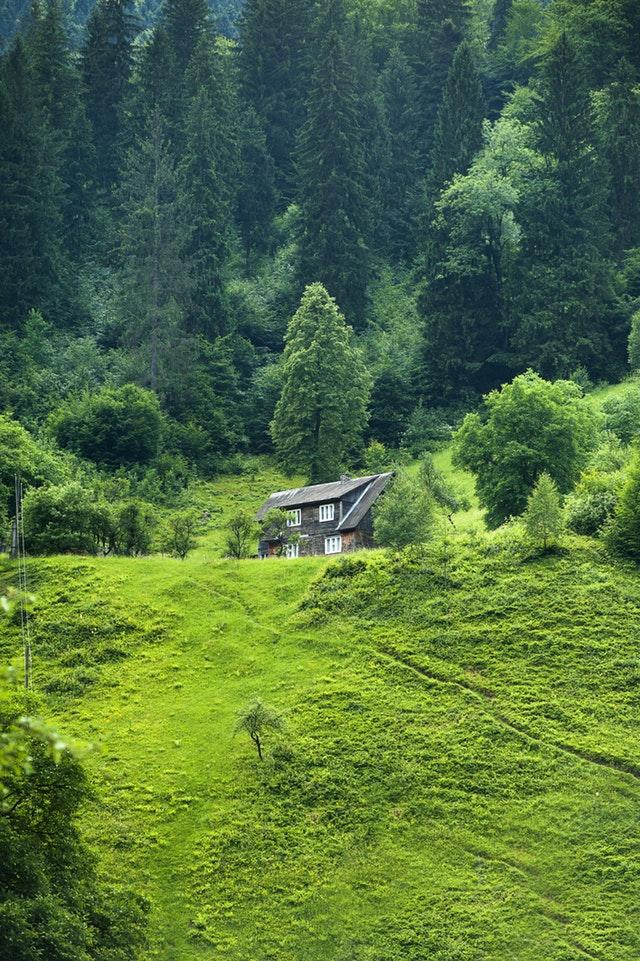 dom eco mieszkanie zielon